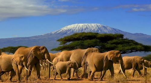 Amboseli-National-Park-elephants.jpg