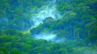 Image-Kakamega-Forest