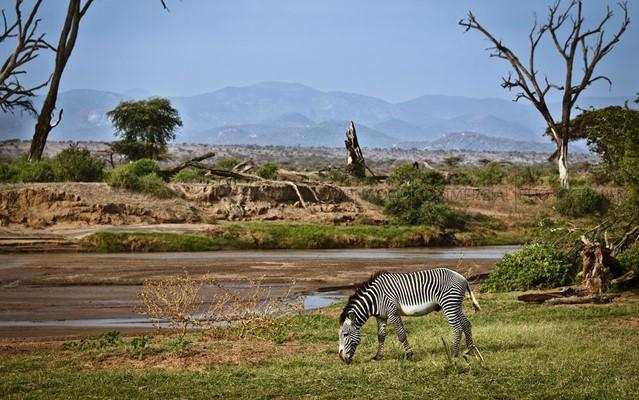 samburu-game-reserve.jpg