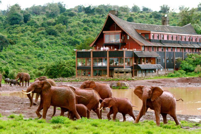 the_ark_elephants